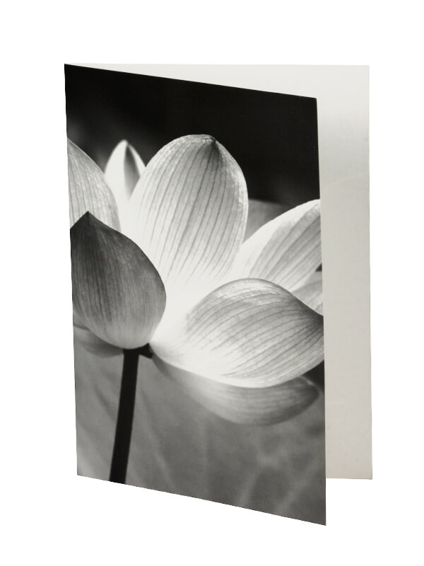 Ansichtkaart Lotus 6