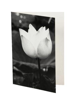 Ansichtkaart Lotus 4